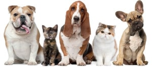 Pet friendly apartments in Provo
